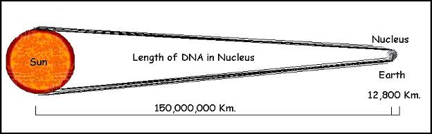 Trilobites  Lenghtdna
